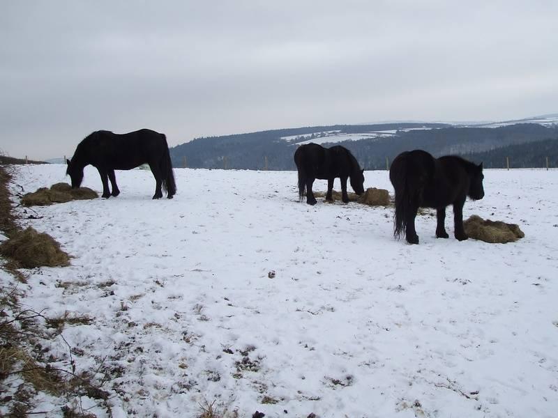 Lydvale Fell Ponies, Rose Tree Cottage, Dippertown, Lewdown, Okehampton, Devon, EX20 4PT, United Kingdom