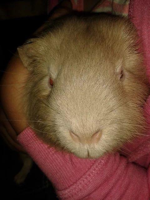 The lovely Hugo