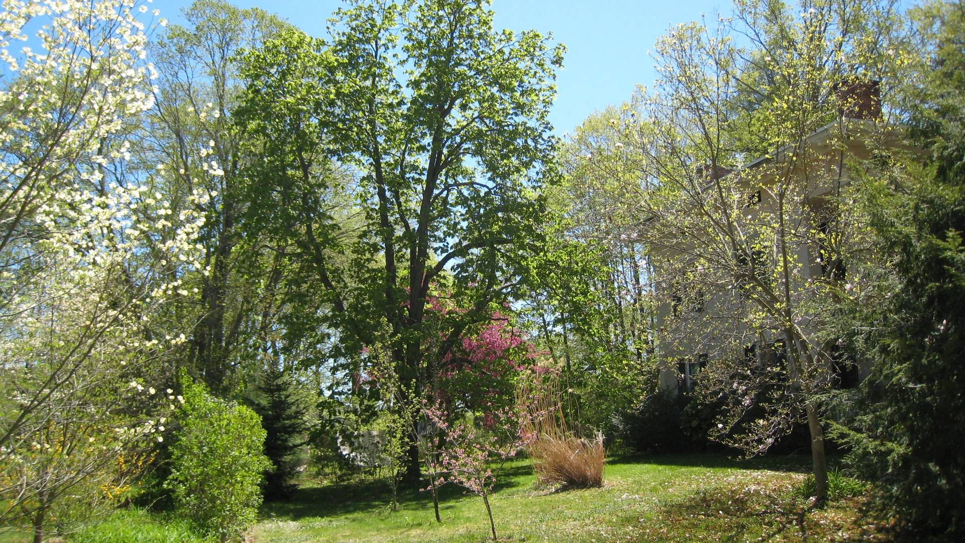 Surrounding Gardens in Spring