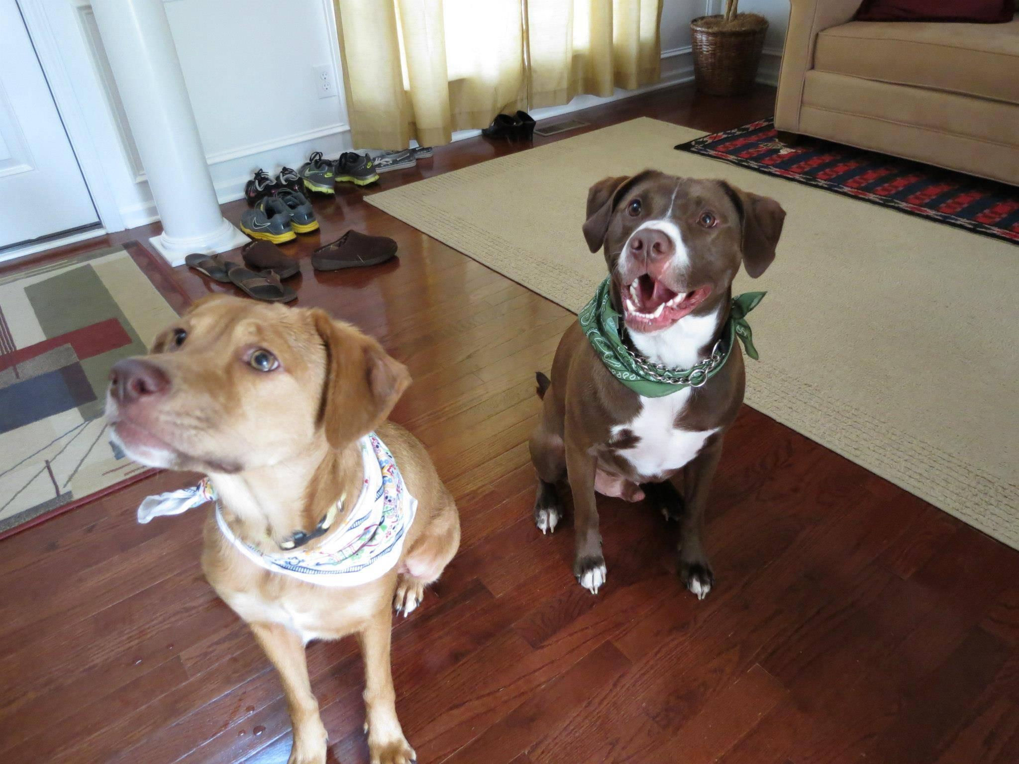 Rosalie and Bentley