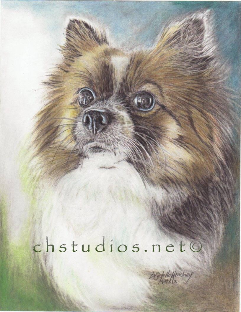 Sheila Dog Pet Portrait Study2