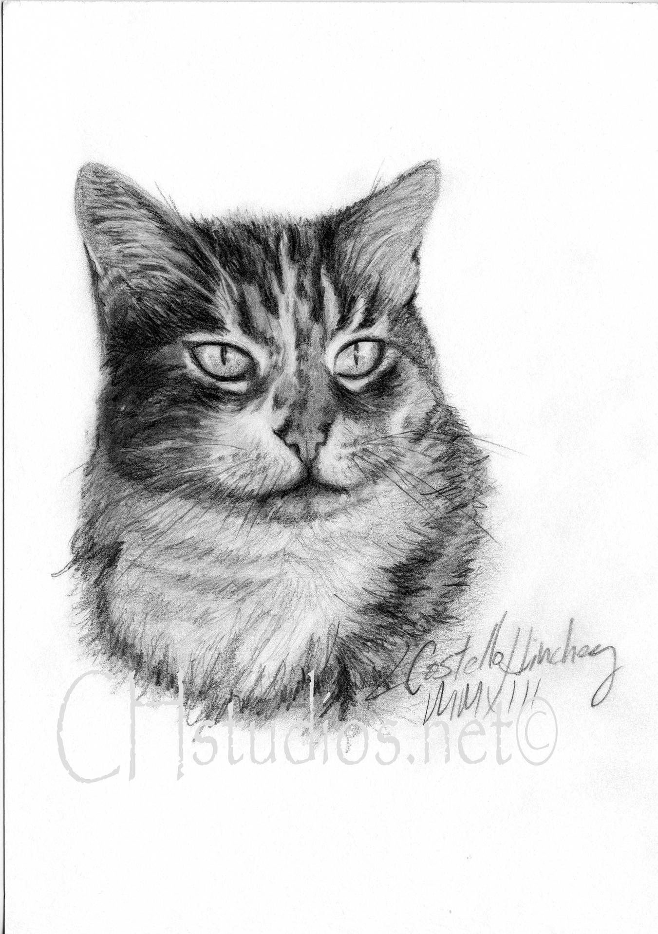 Tyson Pet Portrait Commission
