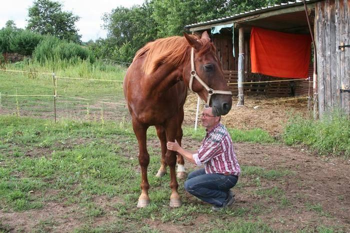 au pied du cheval en liberté