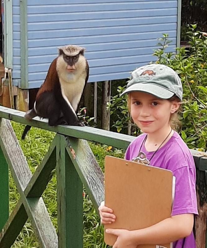 """Maya """"participating"""" in the community-based conservation project, with a mona monkey next to her (Grand Etang National Park, Grenada, West Indies, December 2019)"""
