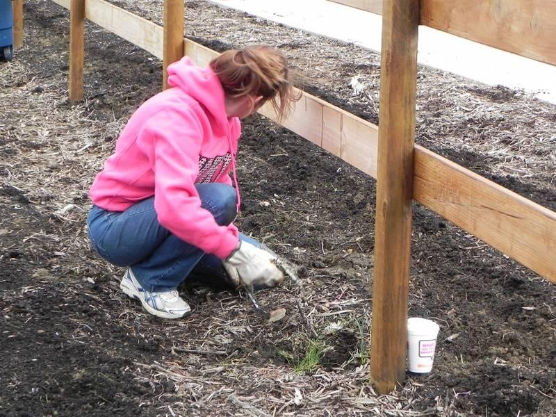 2013 garden project