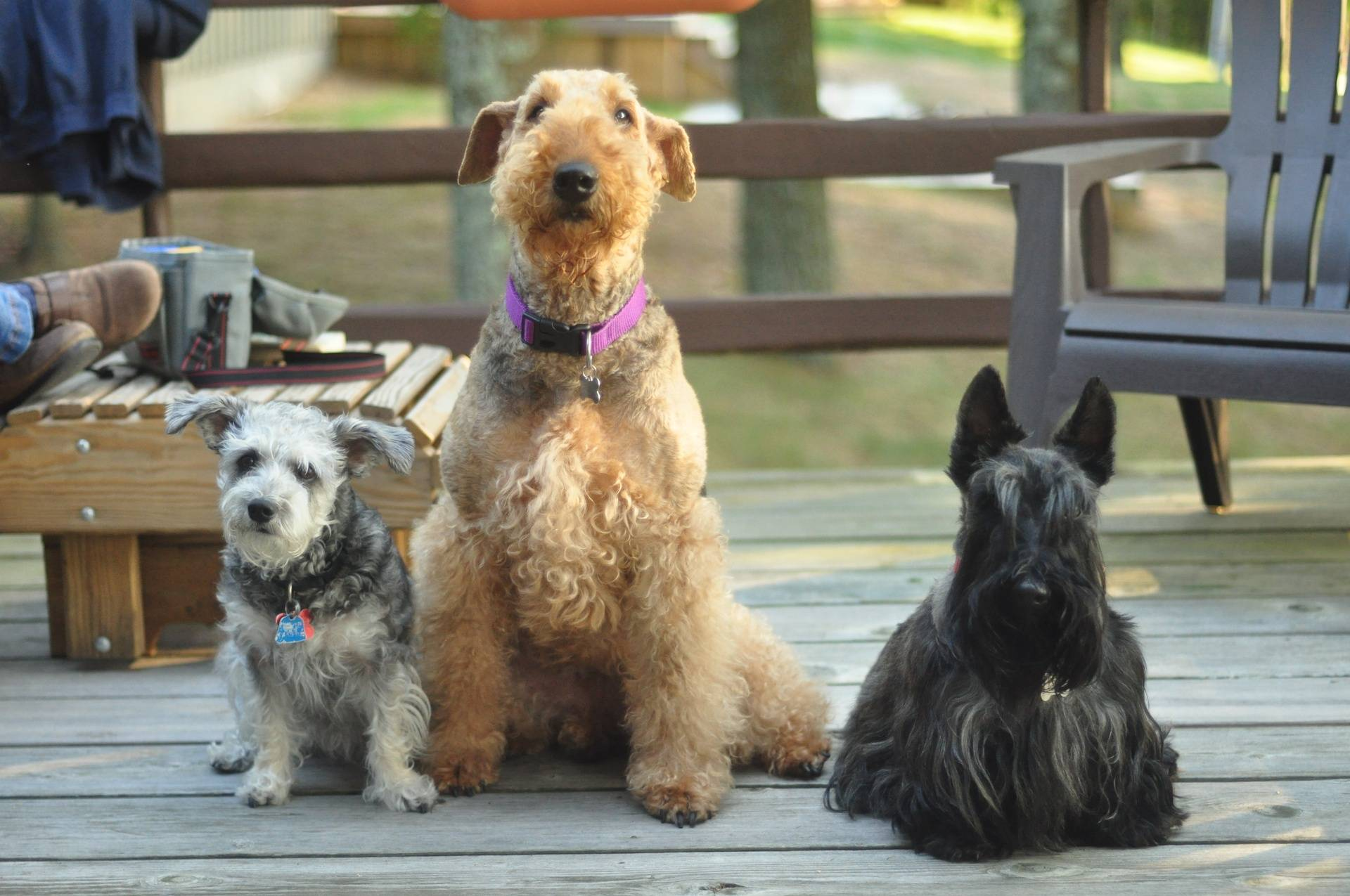 Jelly, Marnie & Docster