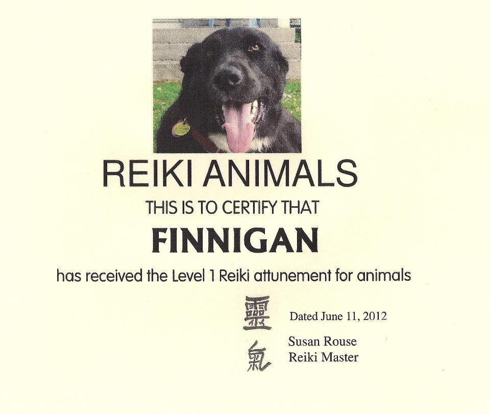 Finnegan the Reiki Dog
