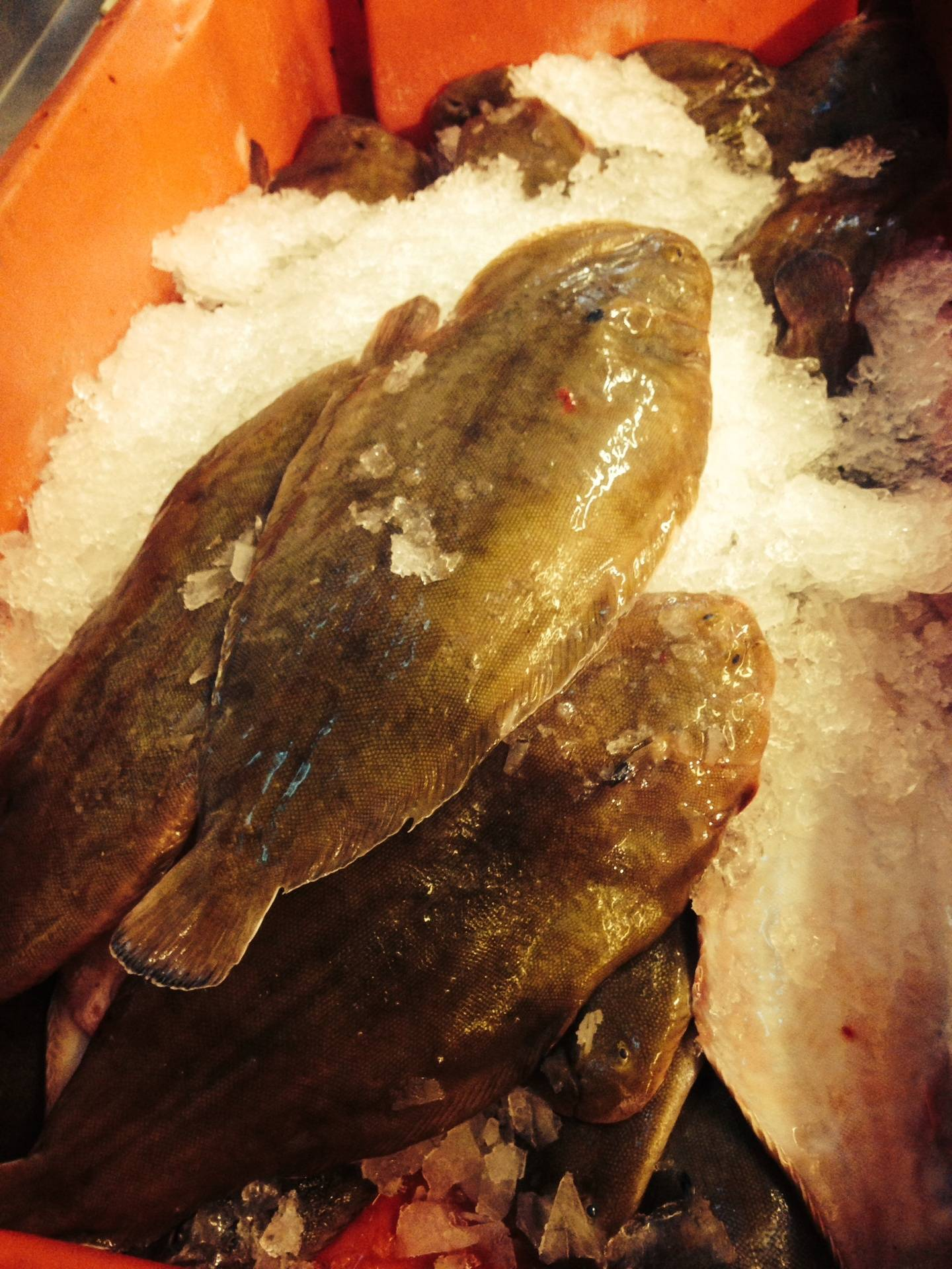 local prime dover sole just landed
