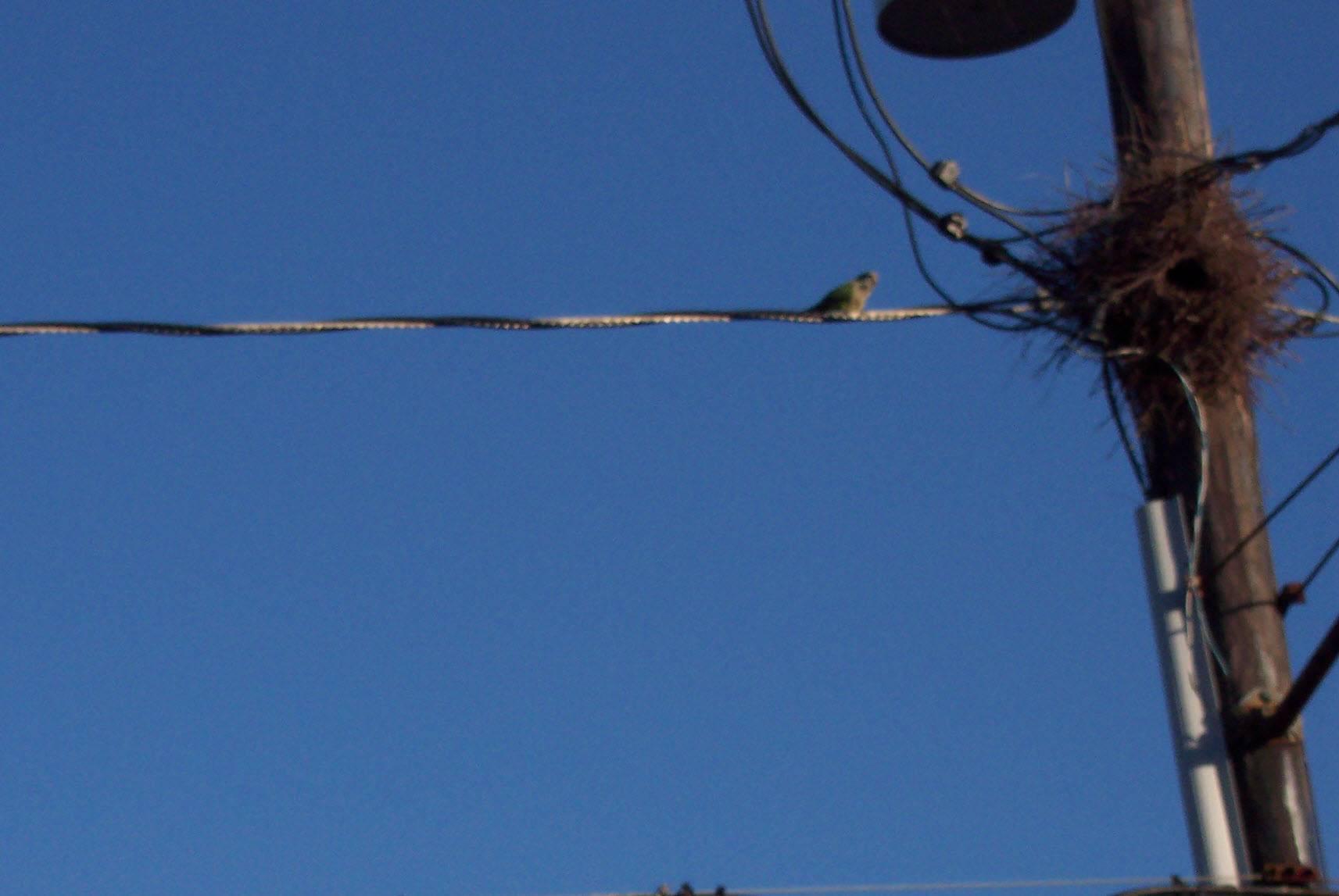Parrot/East Boston