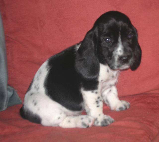 Wilmur as a Puppy