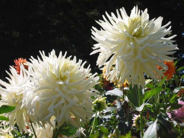 2005 seedling