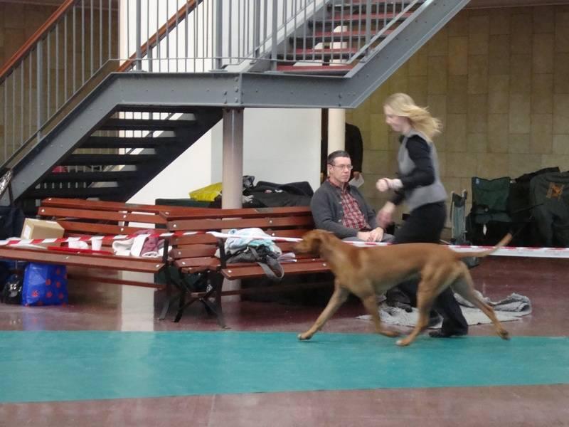 RRCS Limit dog Nov 09