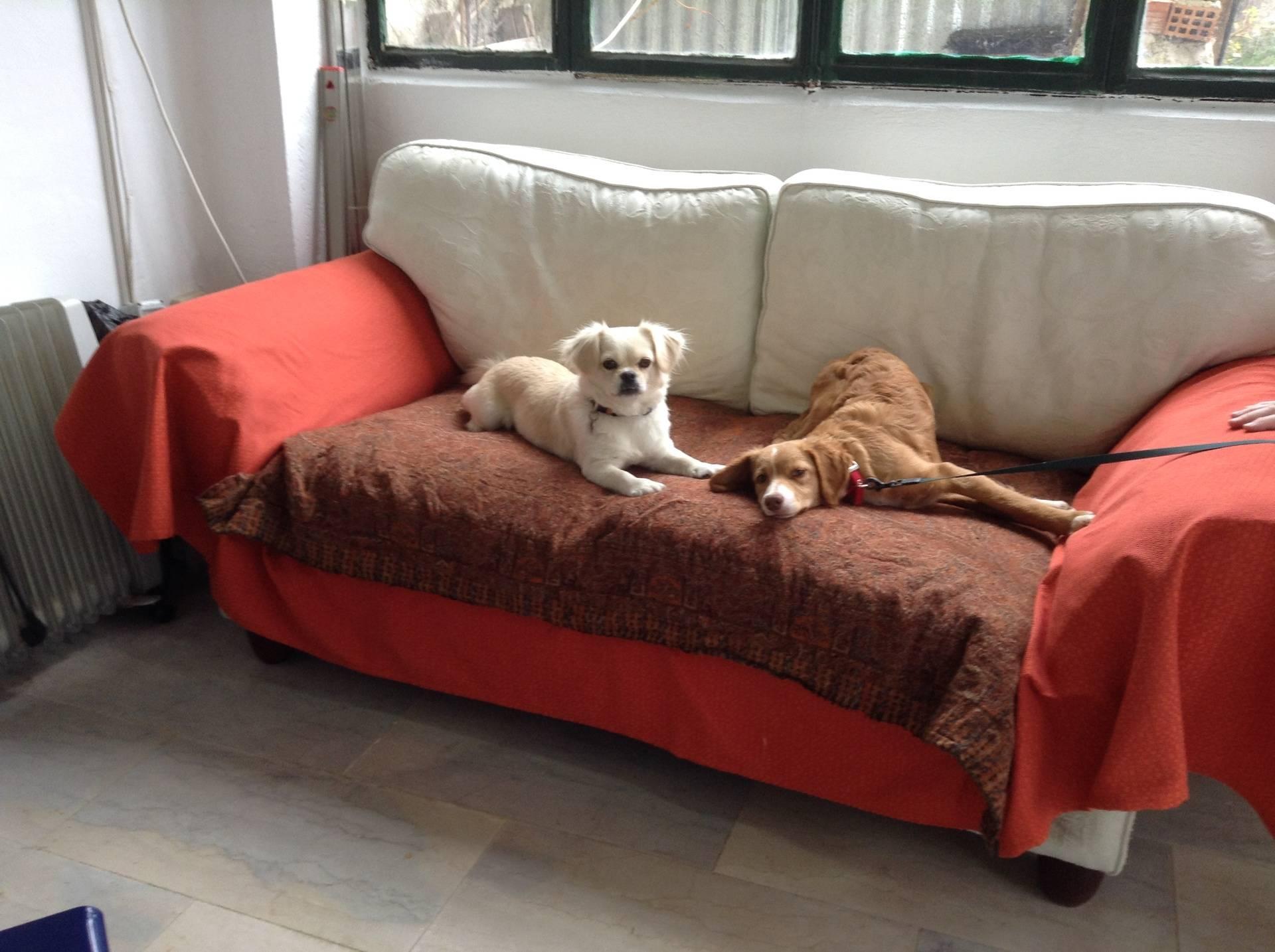 Cherrymou and Tiki