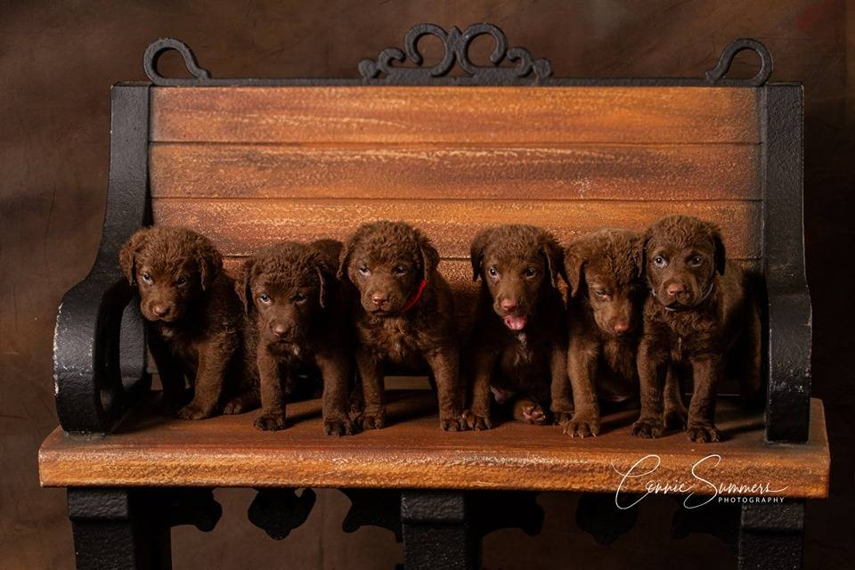 7 of the 12 puppies