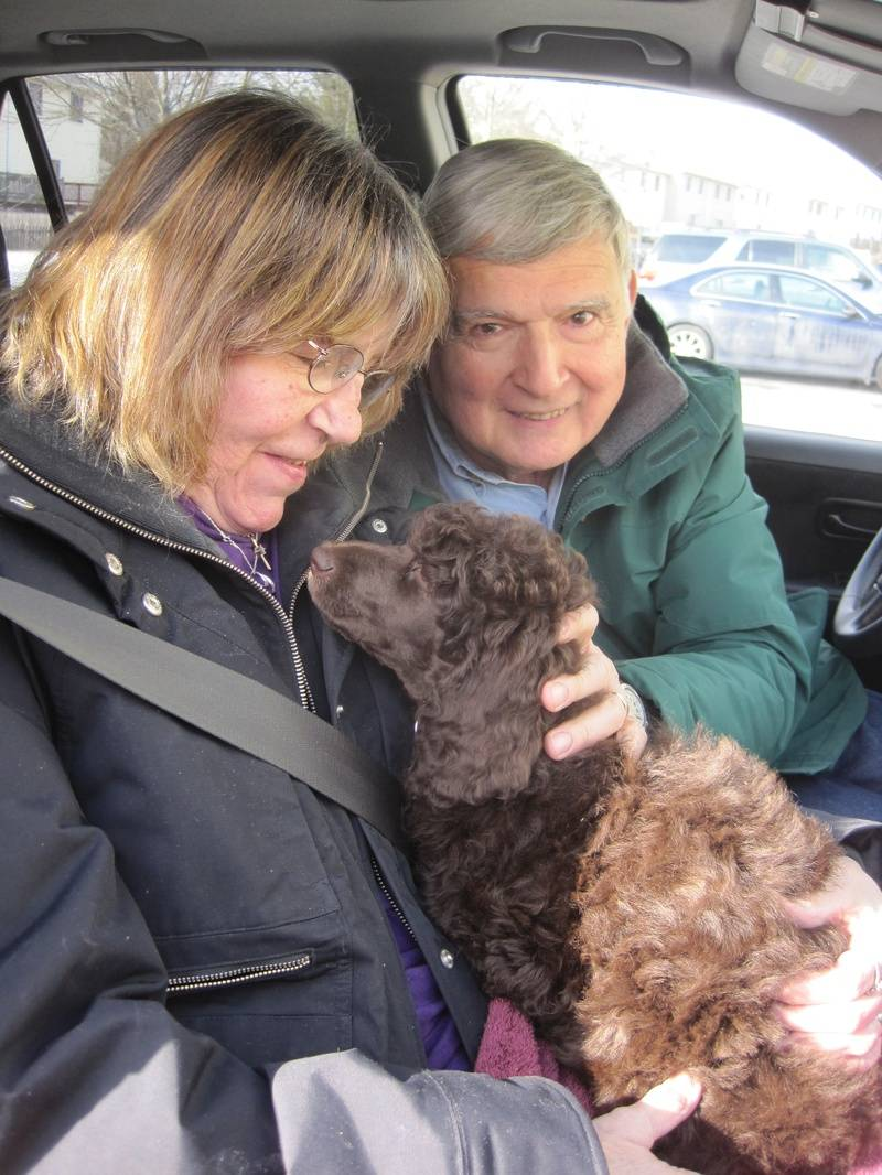 Truffles going home with his new family.