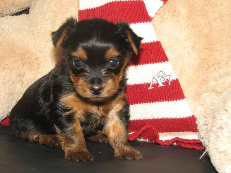 Cari & Winston's Male Born May 16, 2010