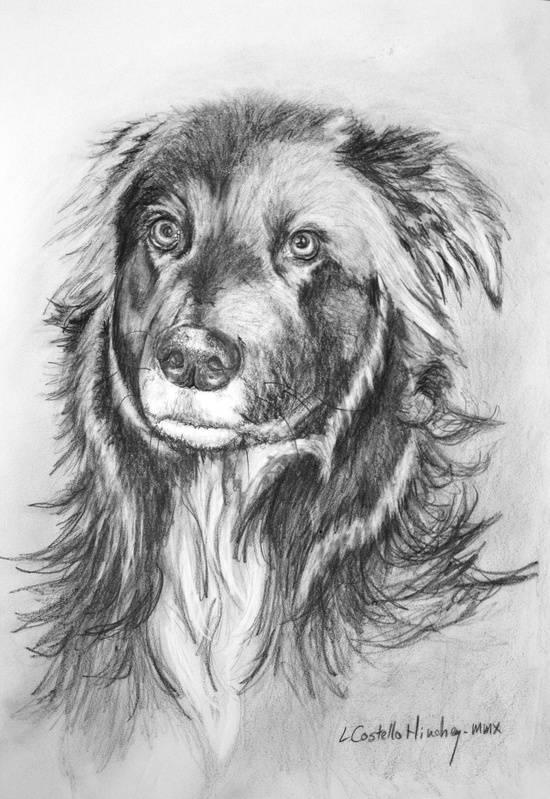 Poco Pet Portrait Commission