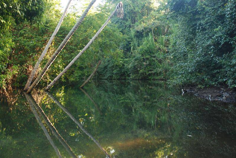 A trip up the Indian River