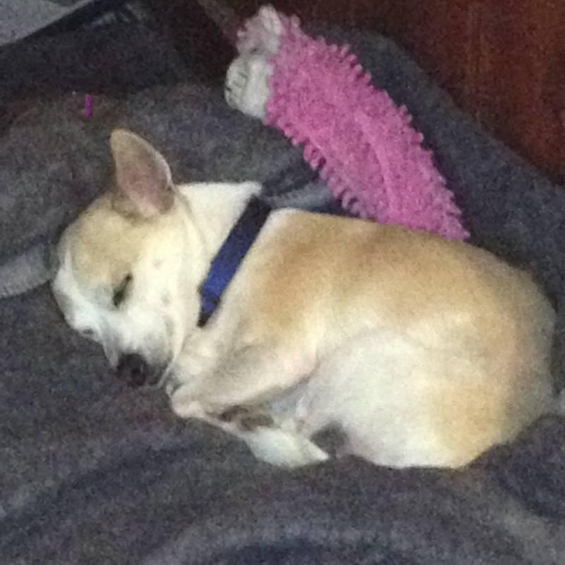 sleepy Bo