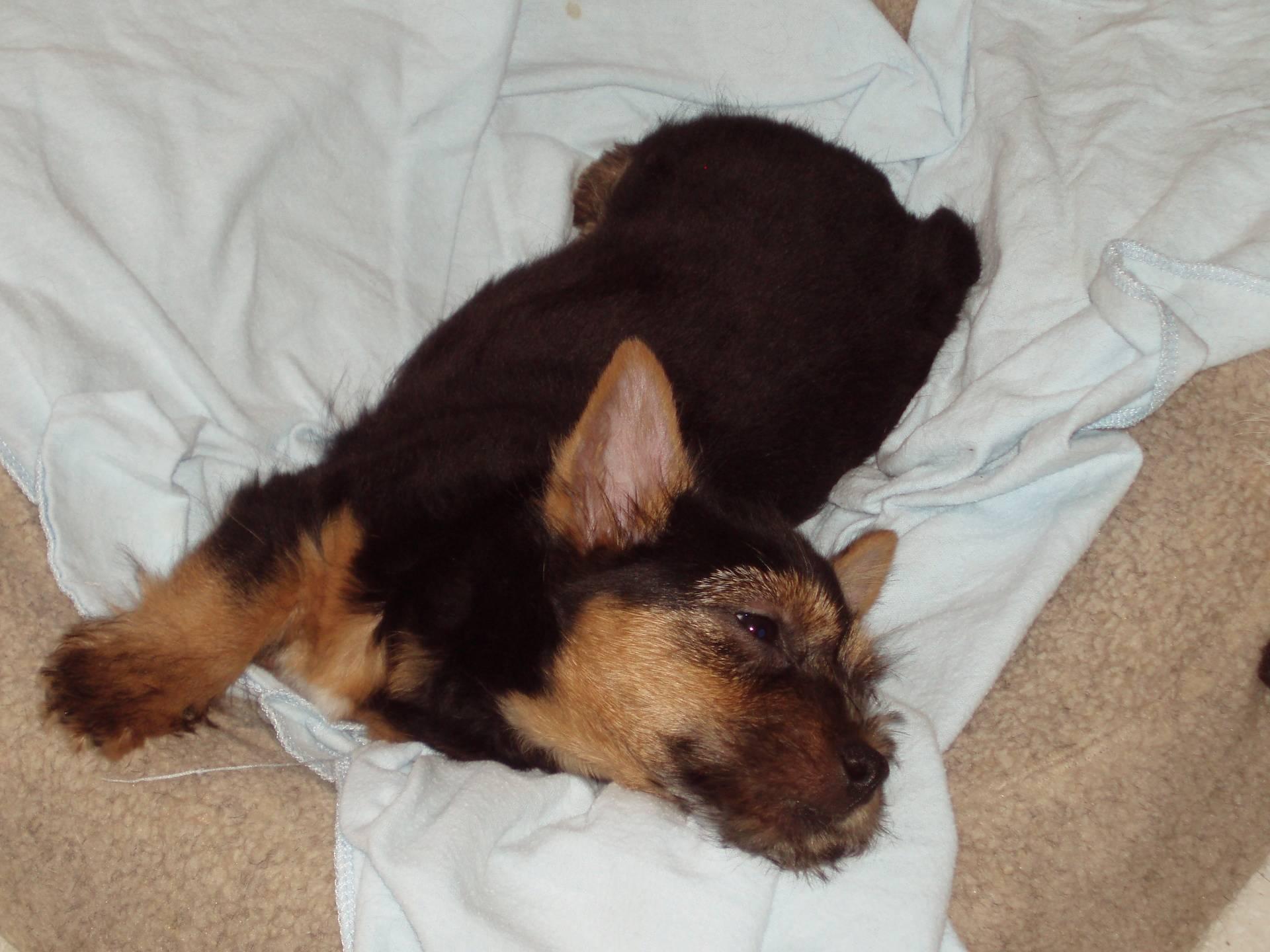 Phoenix at 8 weeks napping