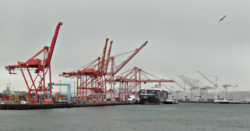 Cranes and Gull