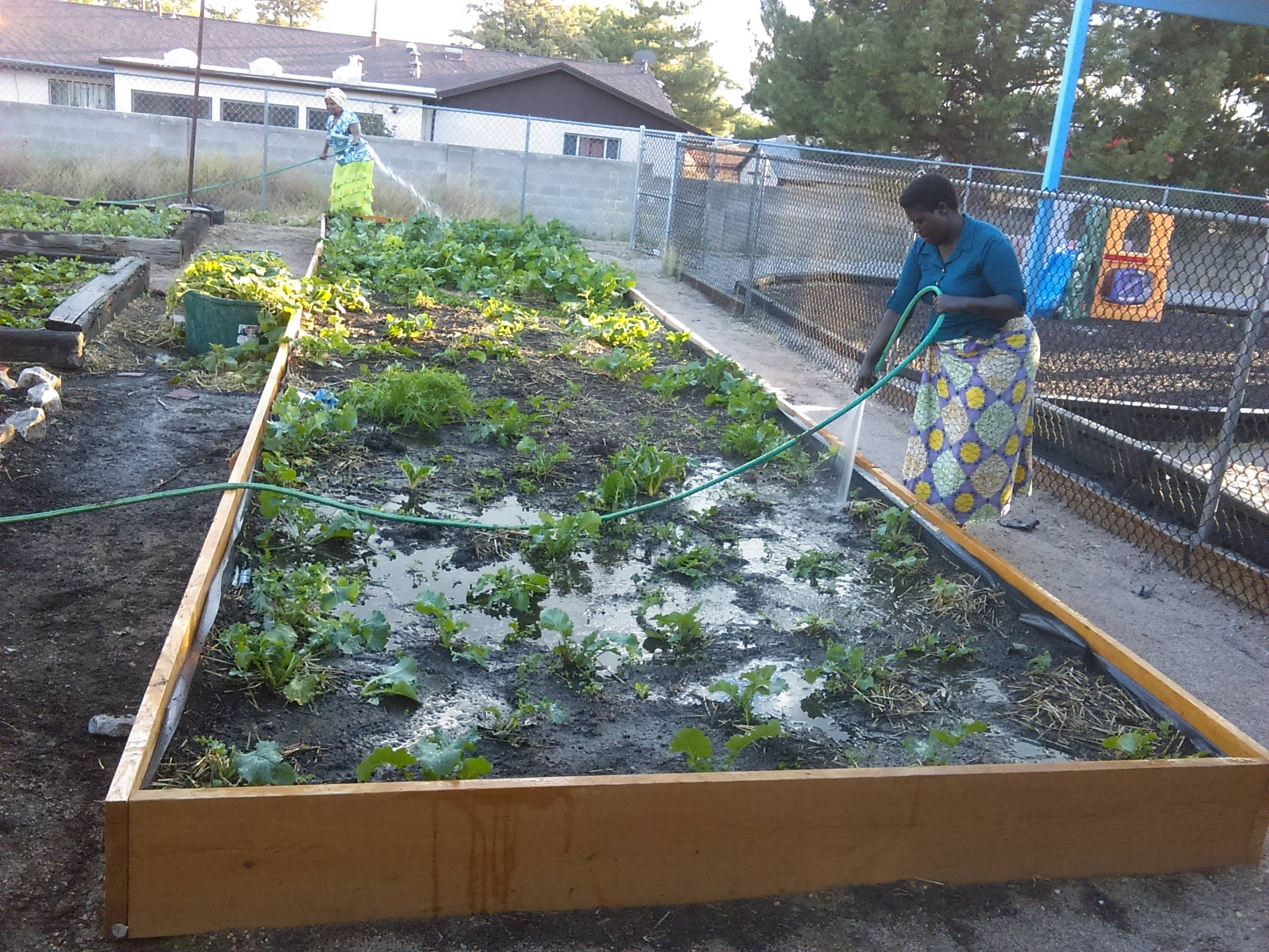 Growing Our own Food
