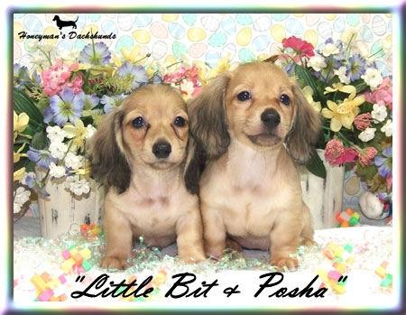 Little Bit & Pasha