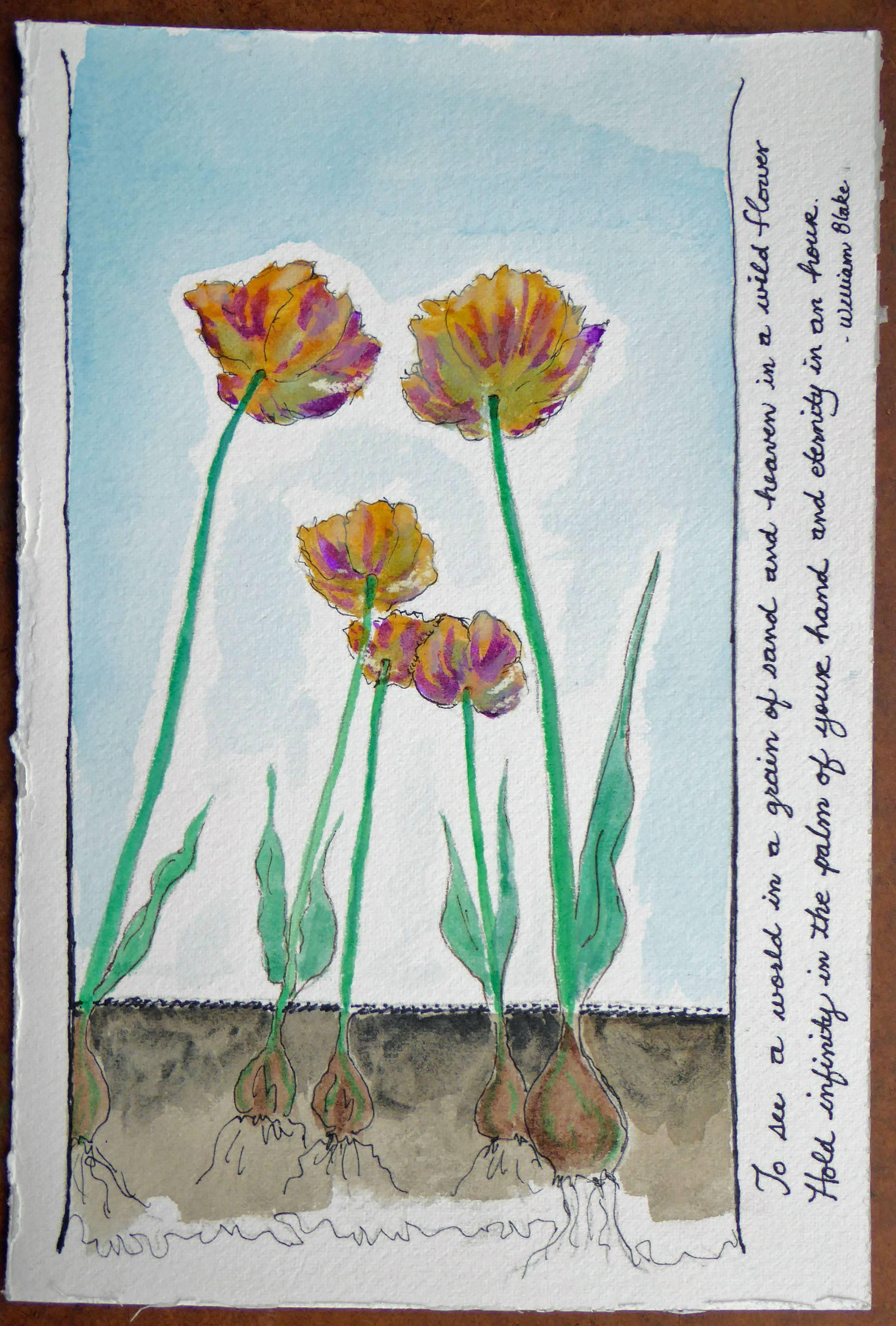 Tulip Love 2