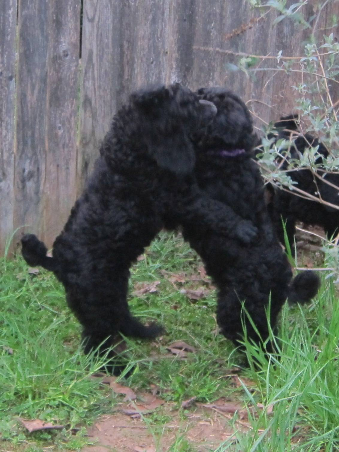 Playing outside.  6 week sold.