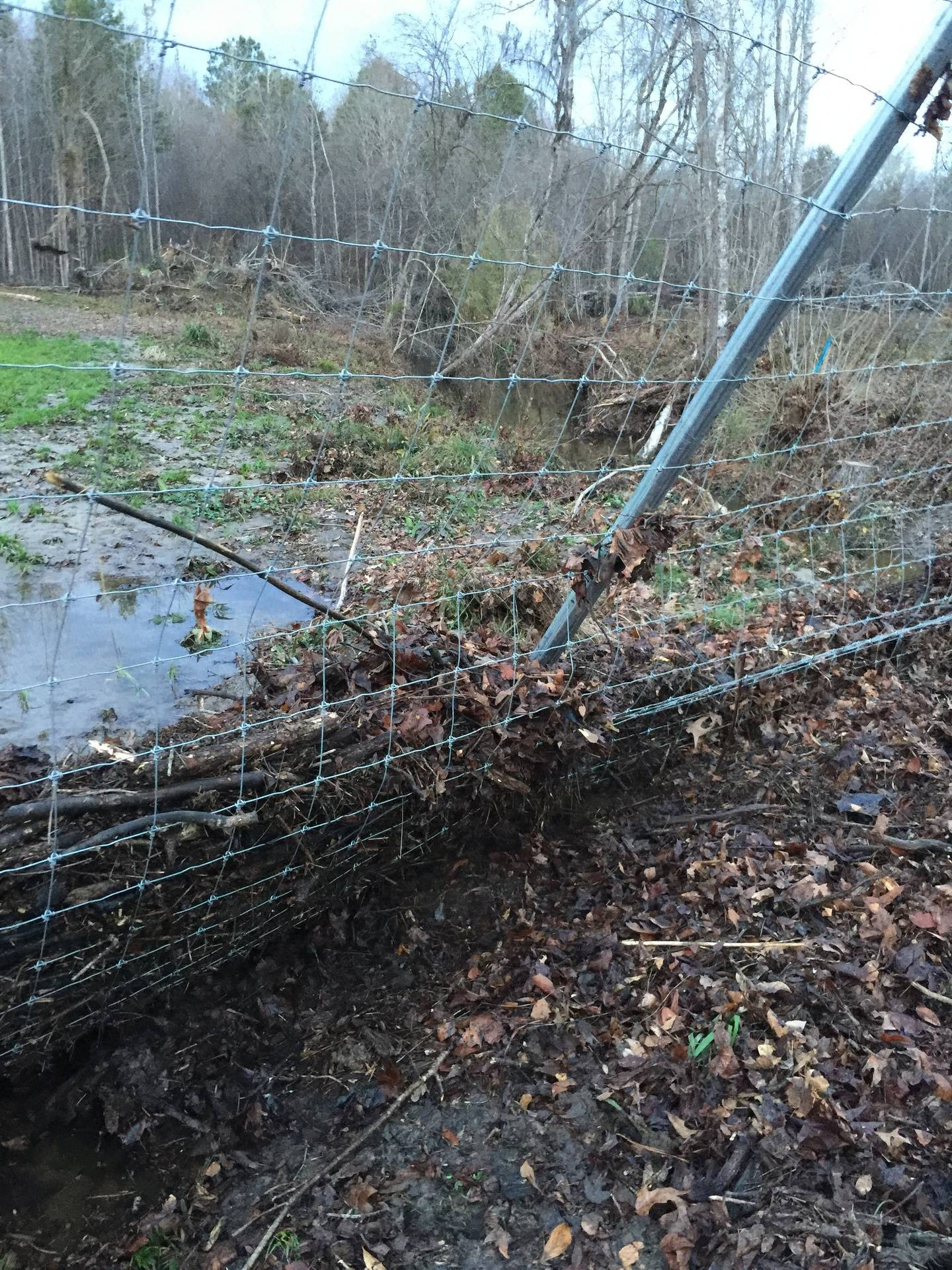 Debris in fence