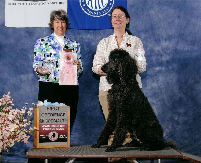 Flash winning Veterans first place at PCA National Specialty at age 15.  4/20/07.