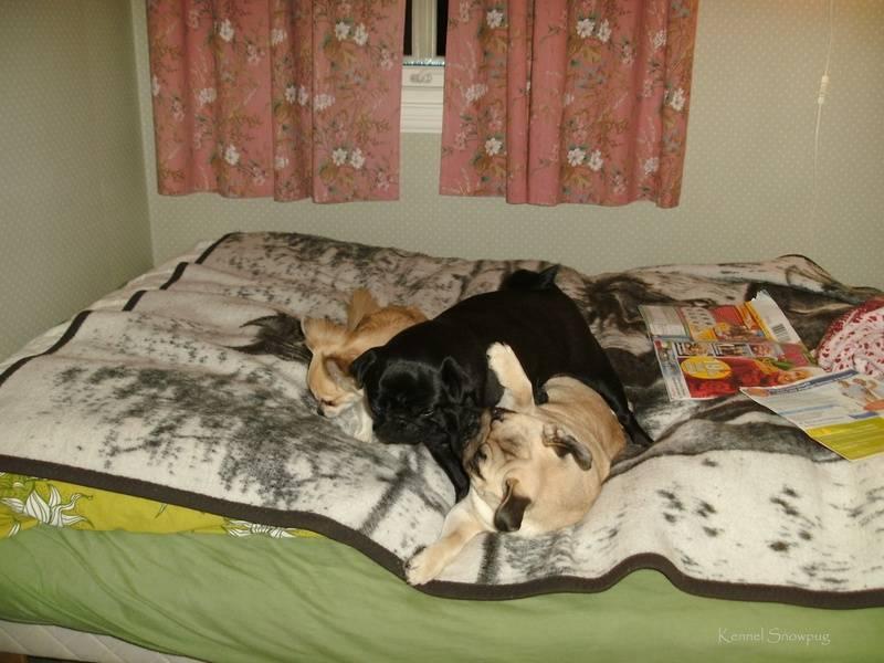 Lek i sengen min på Tennes