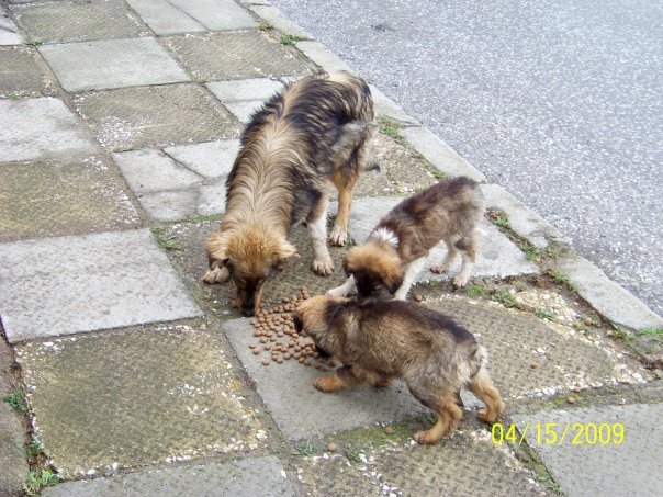 Young dog and pups