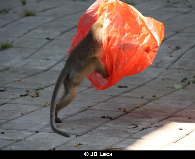 eye-covering play with plastic bag (Pulaki)
