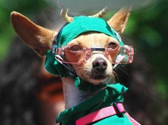 Bono's dog