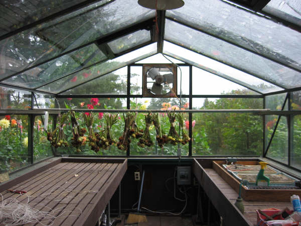 Seed Pods drying