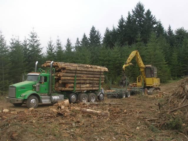 Log Loading by Steve Webster