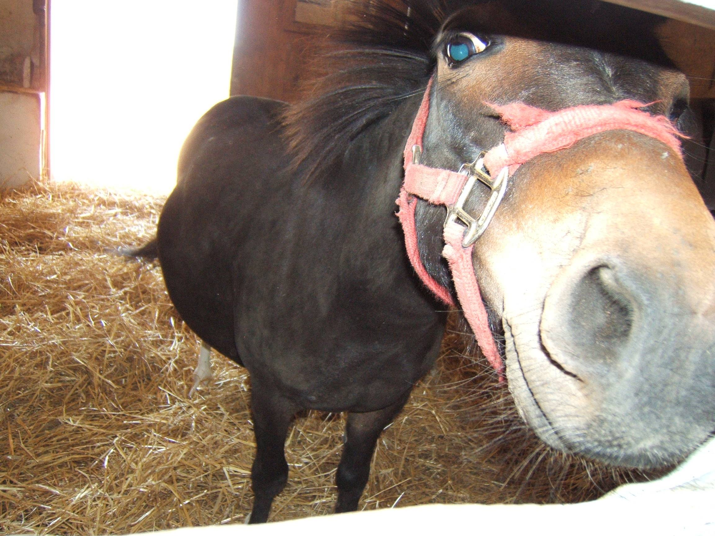 Virgil the mule with some very tiny orbs