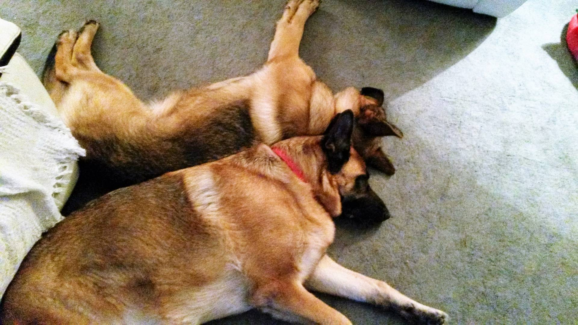 Oscar and Maia