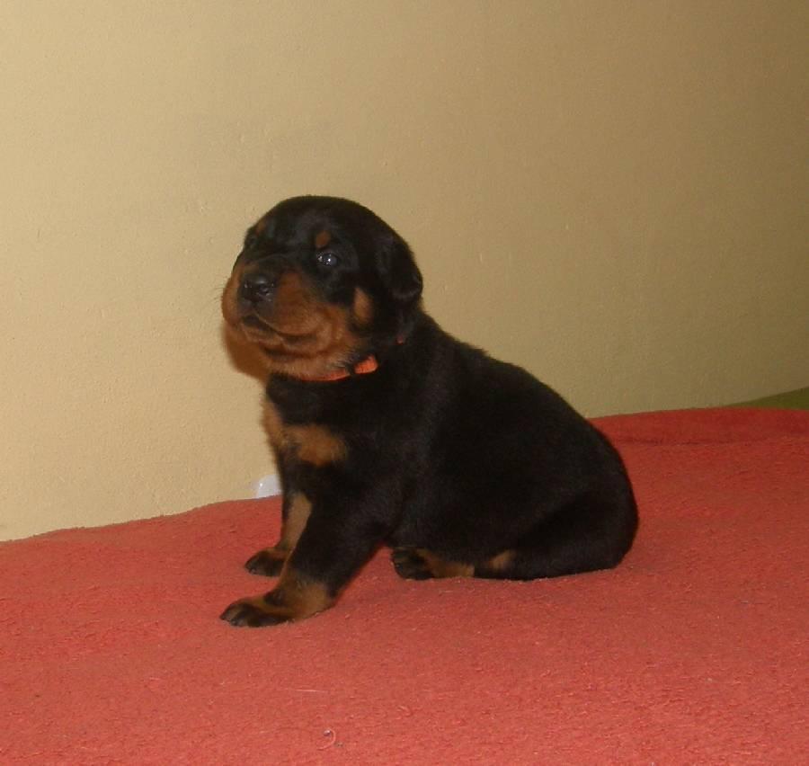 3 tydz/ 3 week old
