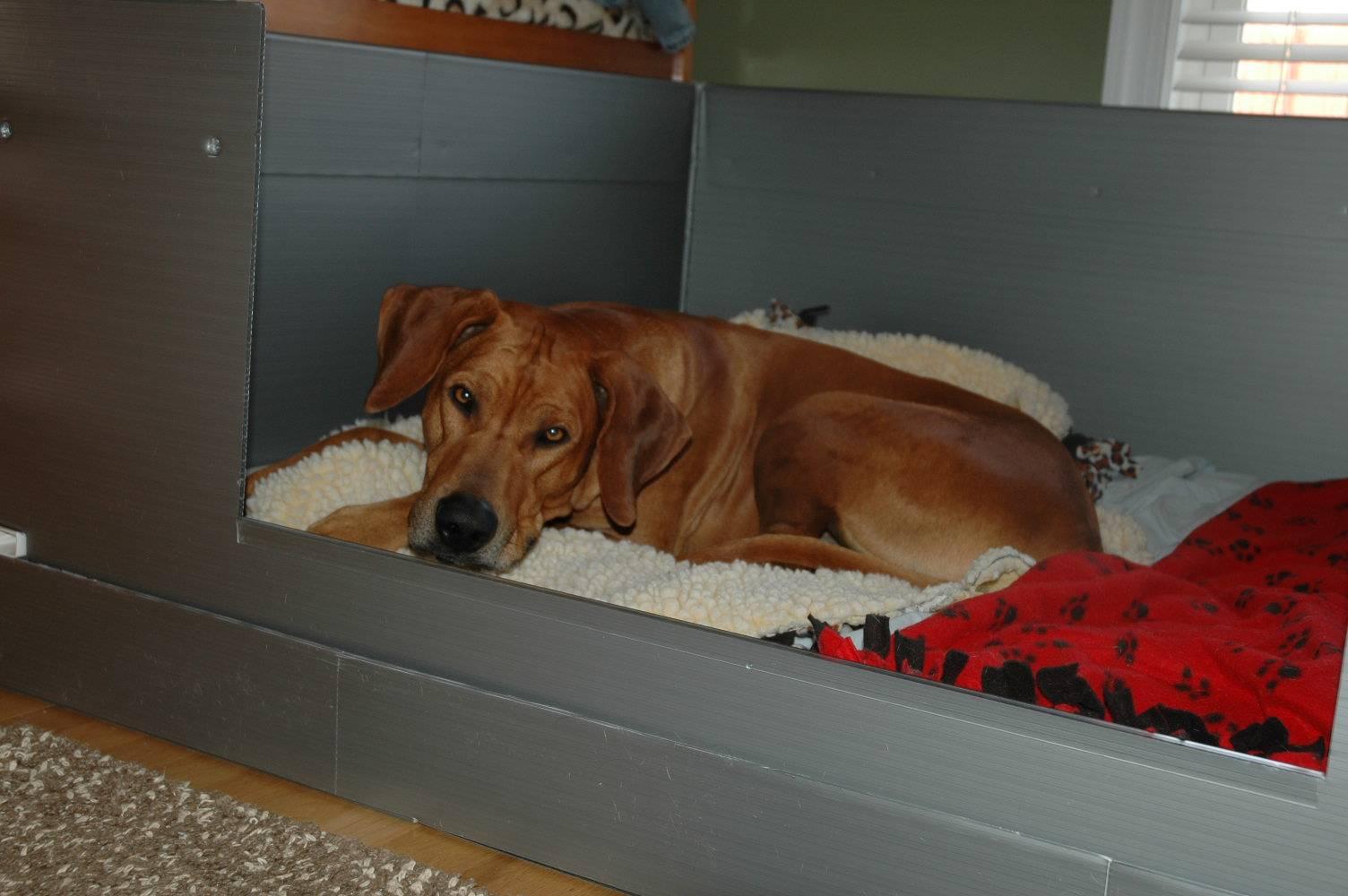 Apollo in box