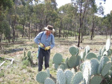 Wheel Cactus Control