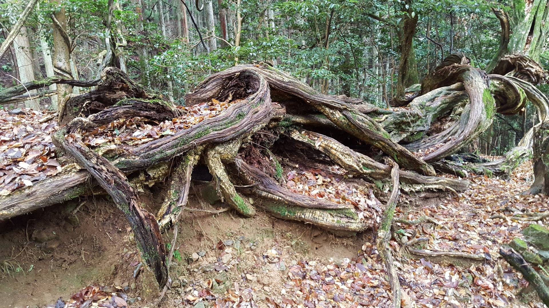 Spectacular roots
