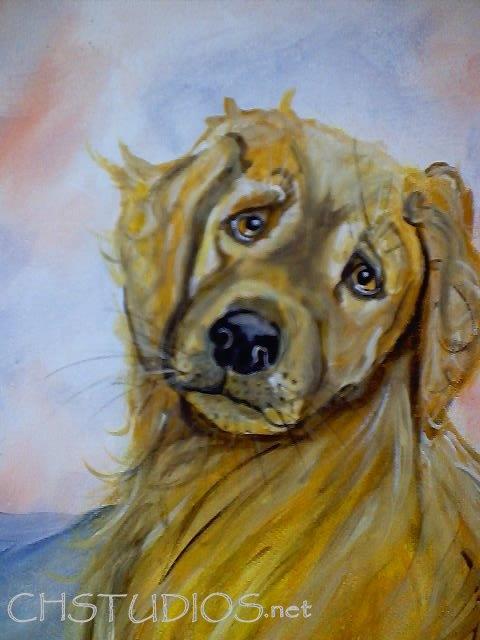 Goldie Pet Portrait Commission