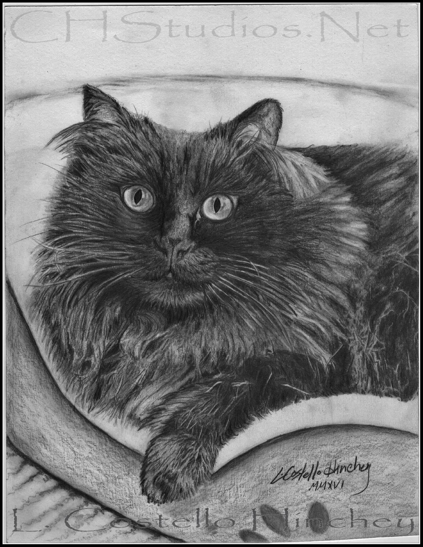 Lola Pet Portrait Commission