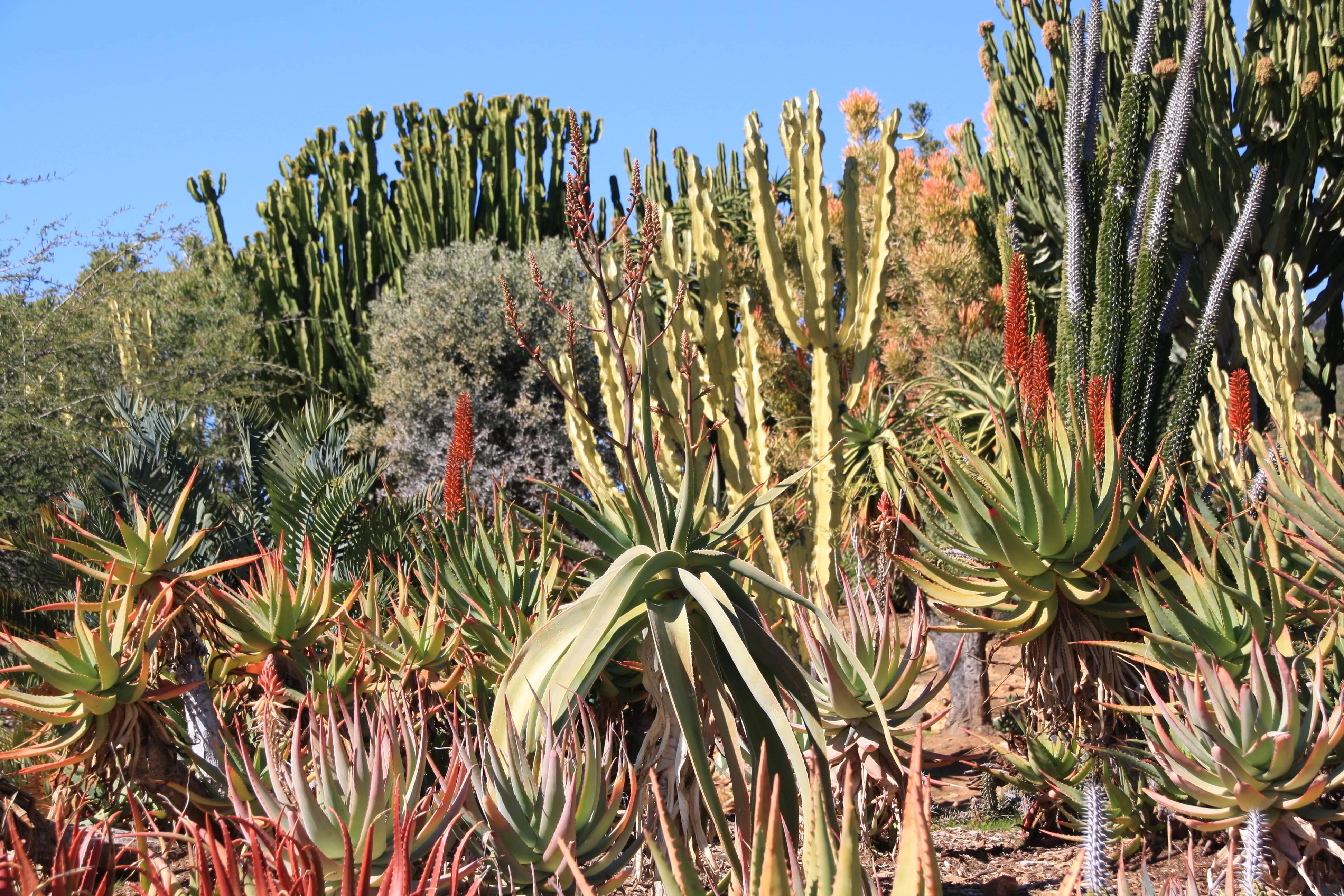 Cactus garden at San Diego Safari Park in Escondido CA