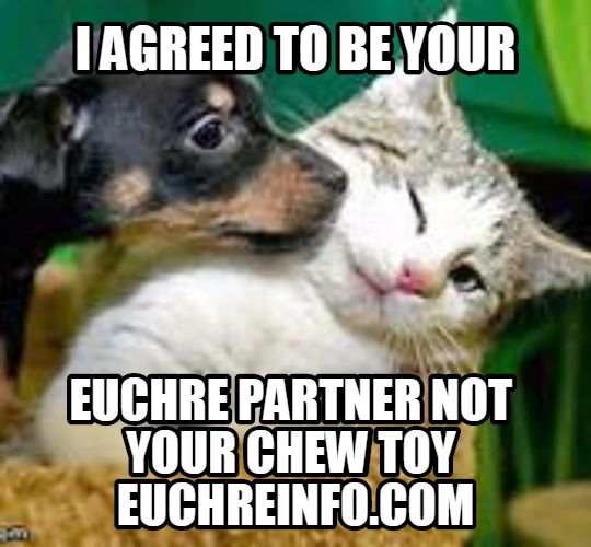 I agreed to be your Euchre partner not your chew toy.