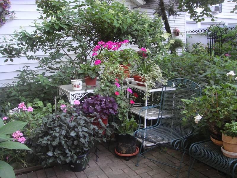 Garden on the LCCPS Garden Tour.