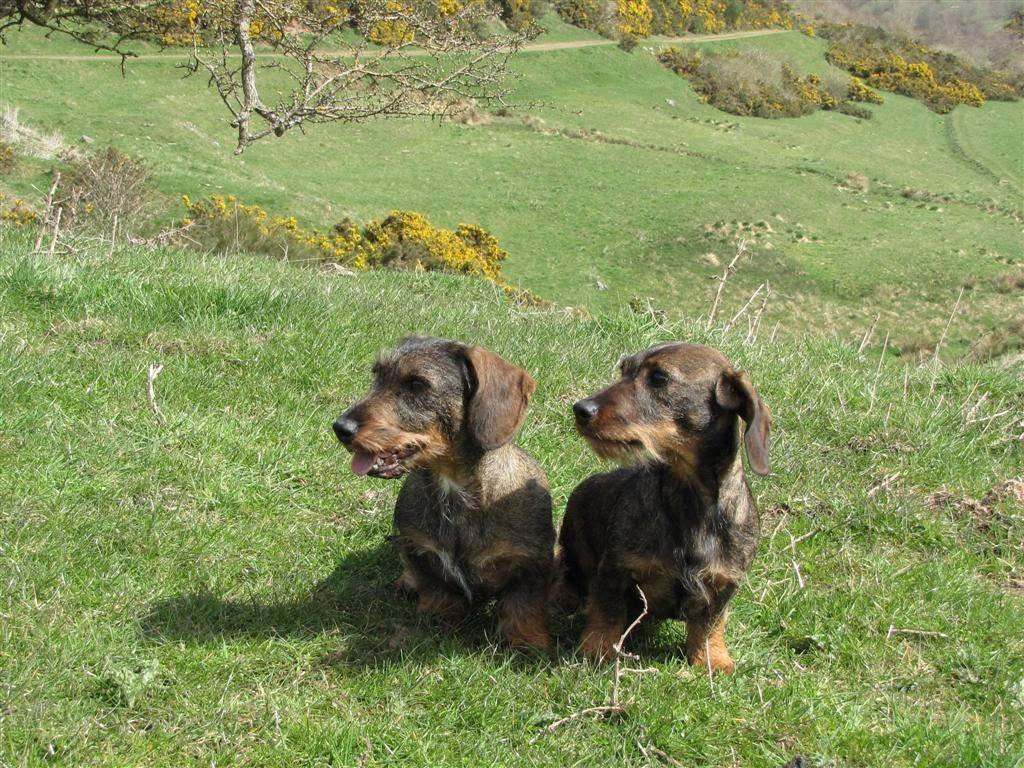 Aya and Holly