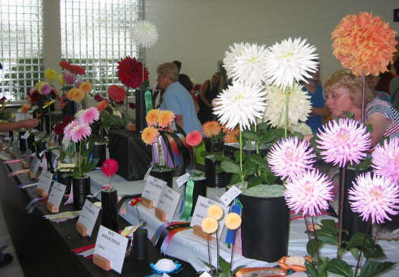 Part of the head table showing the Burton's 5 bloom entry & Buz Carter's triple of Kenora Jubilee
